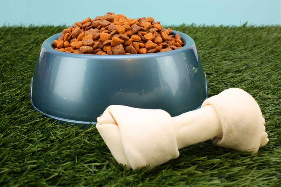 5 Tips For Storing Pet Food For the Long Term